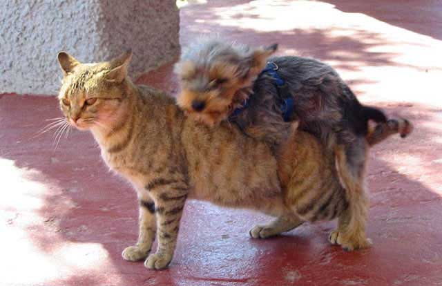 Animals funny pictures